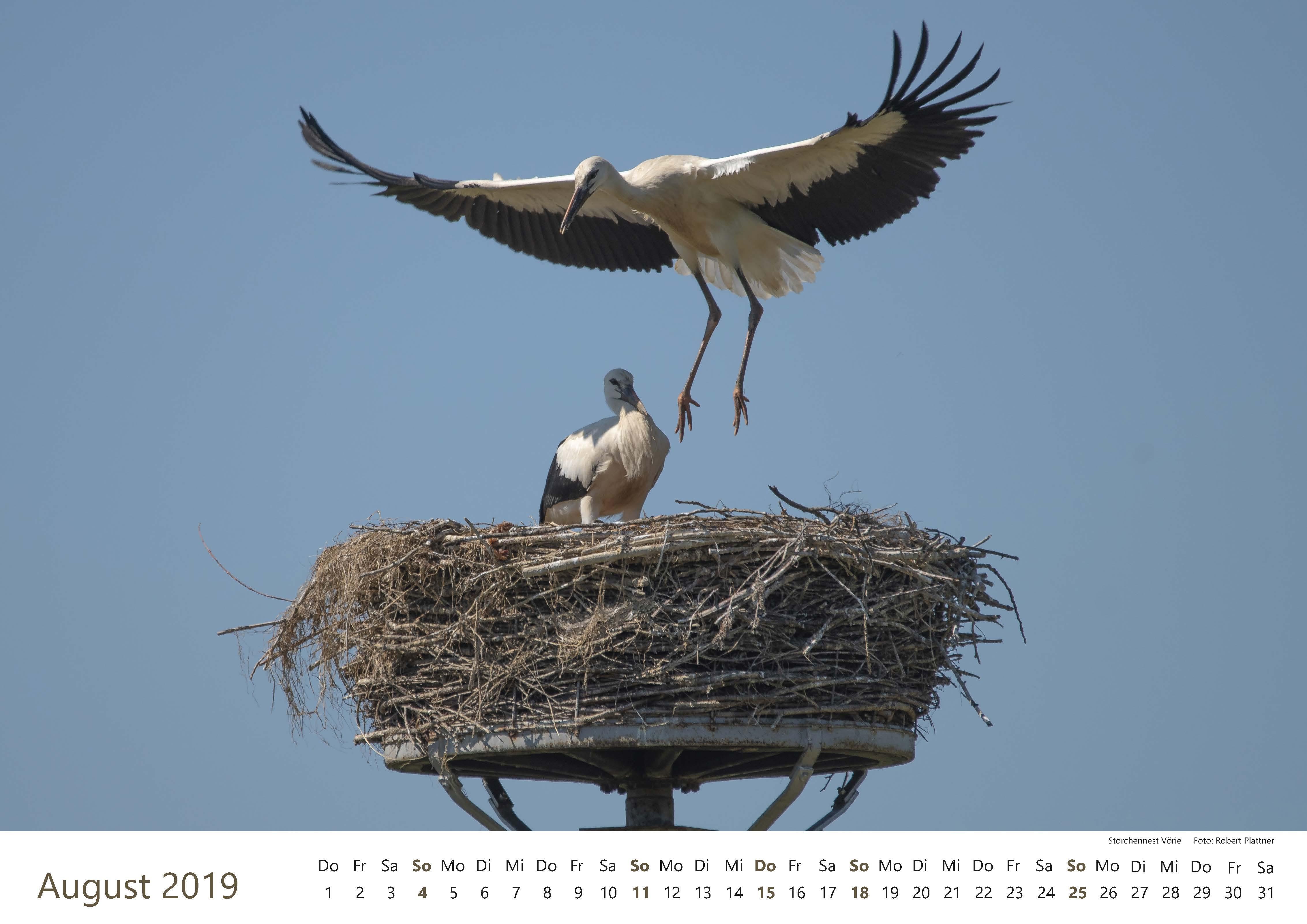 Kalender-2019-Zwischen-Ronnenberg-Deister- Robert-Plattner-Seite-08-August