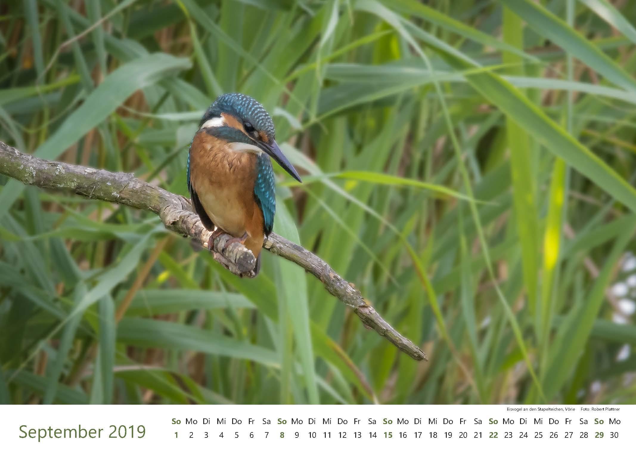 Kalender-2019-Zwischen-Ronnenberg-Deister- Robert-Plattner-Seite-09-September