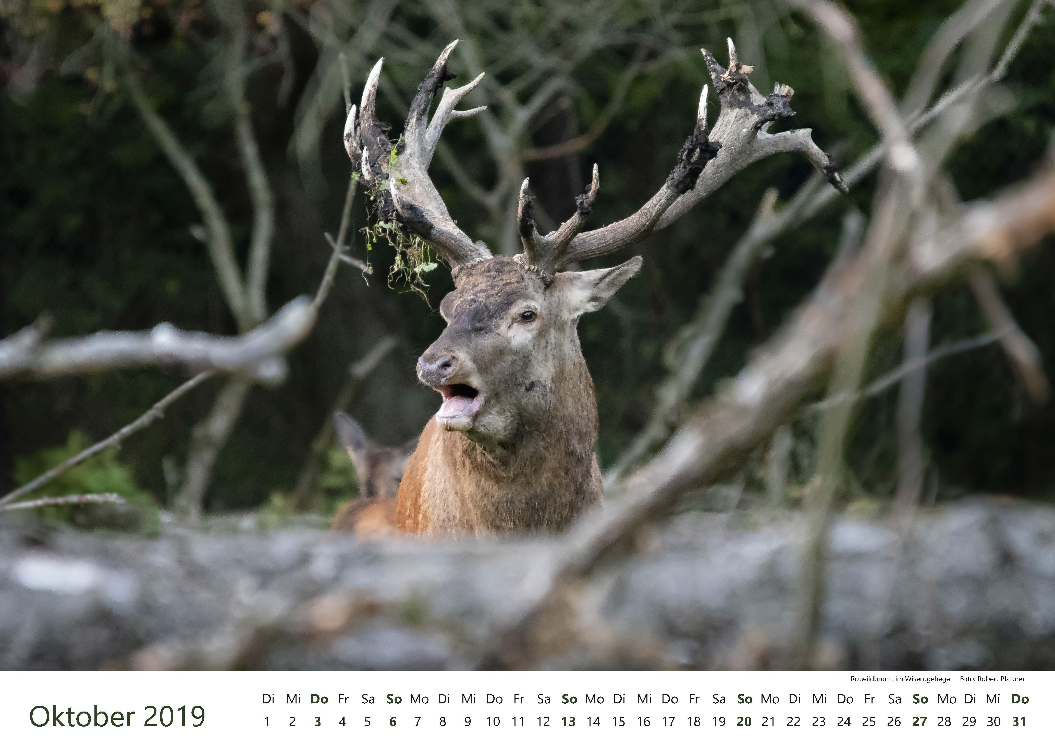 Kalender-2019-Zwischen-Ronnenberg-Deister- Robert-Plattner-Seite-10-Oktober